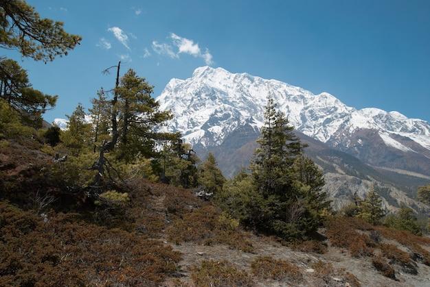 Route tibétaine avec sapins dans la montagne himalayenne et ciel bleu.