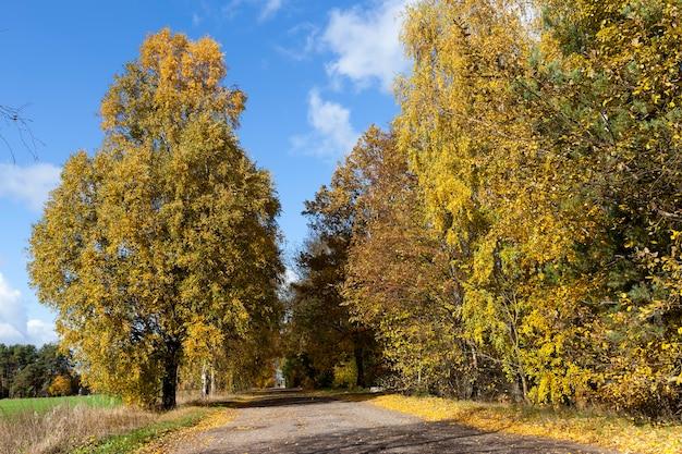 Une route tranquille en automne