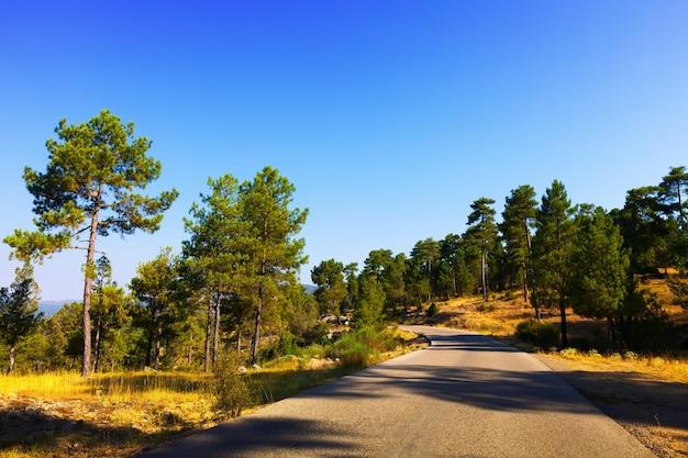 Route à travers la forêt des montagnes