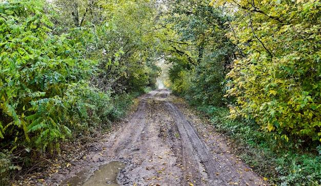 Route à travers la forêt