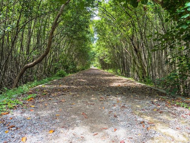 Route à travers le tunnel de l'arbre.