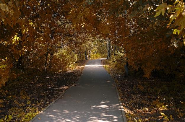 Route vers l'automne au fond du parc de la ville