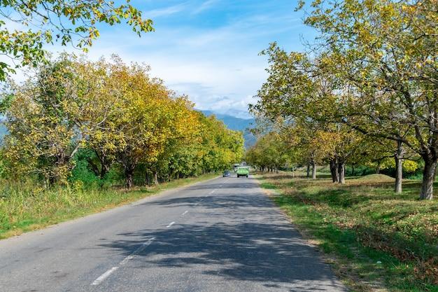 Route vers le mont caucase avec les arbres déchiquetés de feuilles au bord de la route. kakheti, géorgie.