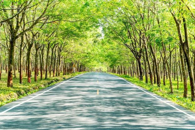 Route vide avec arche d'arbre ou tunnel