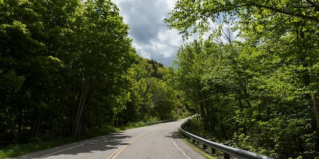 Route vide au milieu des arbres dans la forêt, pleasant bay, parc national des hautes-terres-du-cap-breton, cape breton est
