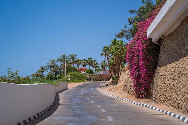 Route vide, fleurs rouges et palmiers dans la rue d'egypte à sharm el sheikh
