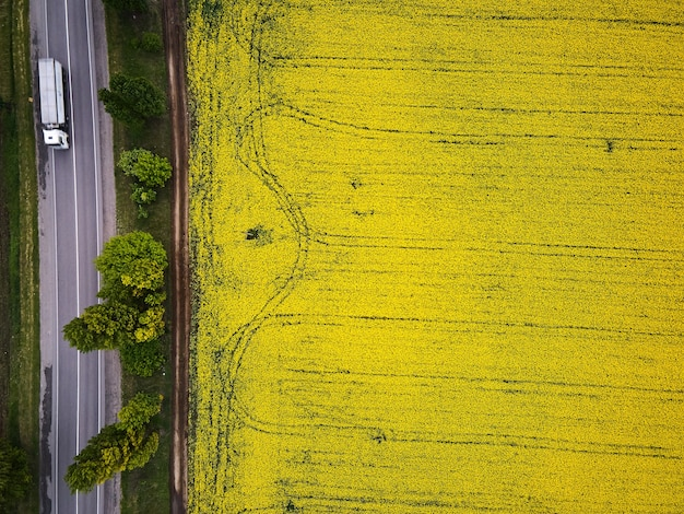Route avec des voitures à travers le champ vue aérienne du champ de fleurs de colza de printemps, vue à vol d'oiseau d'un drone d'une récolte de canola qui passe