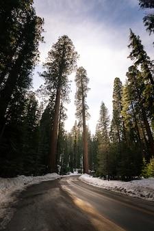 Routes à travers le parc national de sequoia en californie