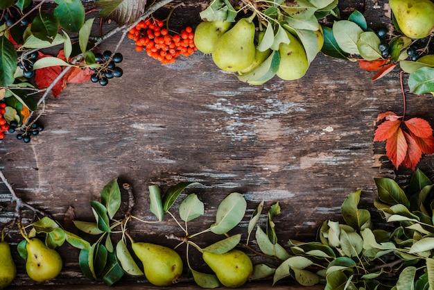 Rowan rouge et noir avec des branches de poirier et des feuilles d'automne