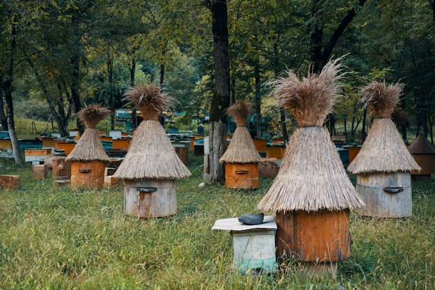 Ruche avec des abeilles dans la nature