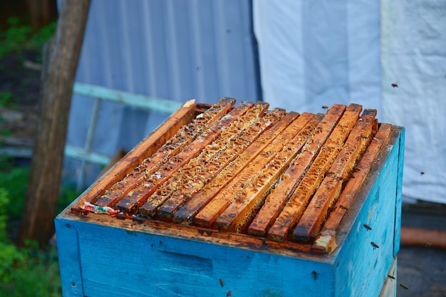 Ruche en bois avec nid d'abeille