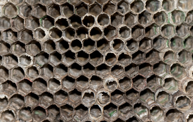 Ruche de guêpe sèche se bouchent. fond de ruche de guêpe.