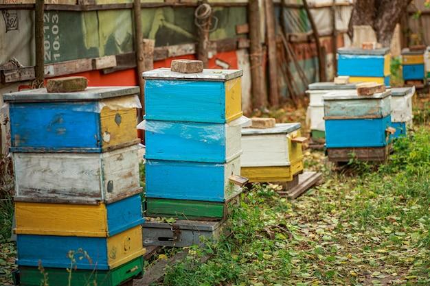 Rucher avec de vieilles ruches en bois à l'automne