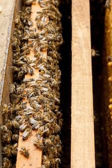Ruches d'abeilles aux abeilles avec nids d'abeilles et abeilles mellifères