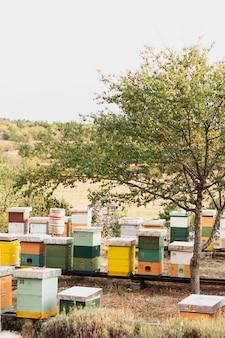 Ruches d'abeilles colorées sur le terrain