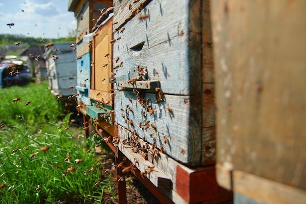 Ruches en bois dans le rucher