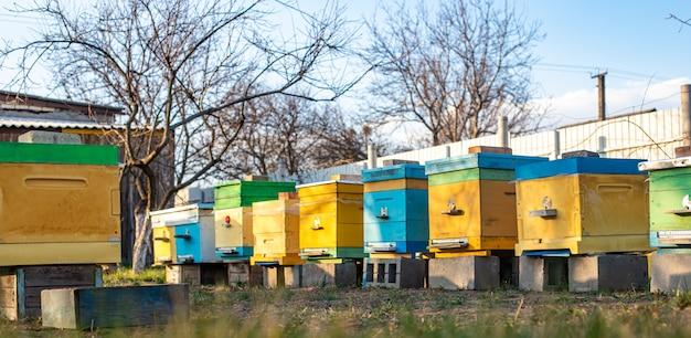 Ruches en bois et en plastique colorés contre le ciel bleu en été. rucher debout dans la cour sur l'herbe. temps froid et abeille assise dans la ruche.