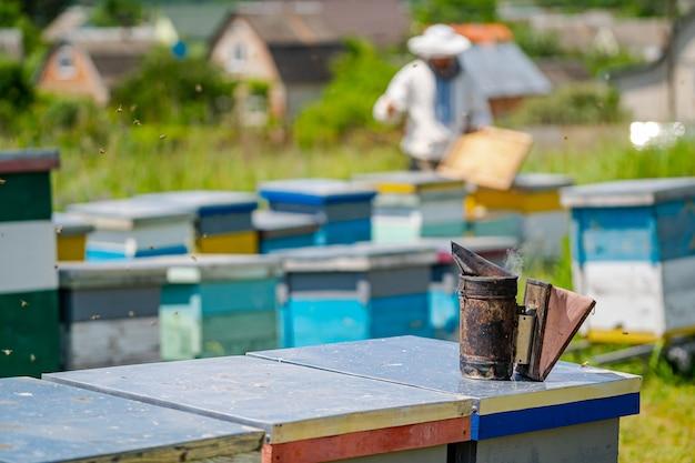 Ruches colorées d'abeilles sur un pré en été. ruches dans un rucher avec des abeilles volant vers les planches d'atterrissage. apiculture. fumeur d'abeille sur ruche.