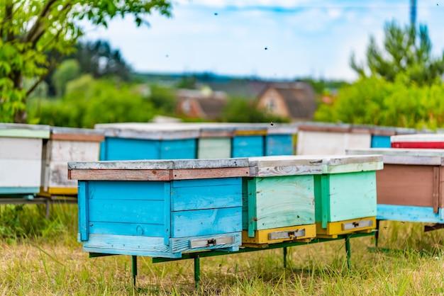 Des ruches colorées dans le jardin apicole