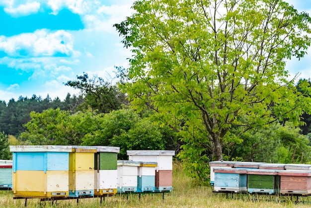 Ruches dans un rucher avec des abeilles volant vers les planches d'atterrissage dans un jardin verdoyant