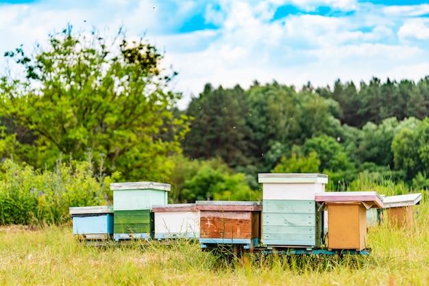 Ruches dans un rucher avec des abeilles volant vers les planches d'atterrissage