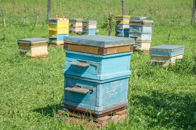 Ruches dans le rucher