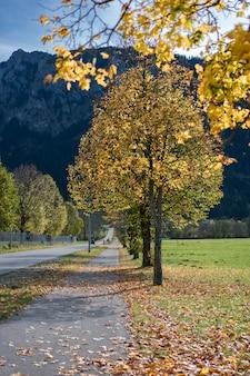 Rue paysage naturel