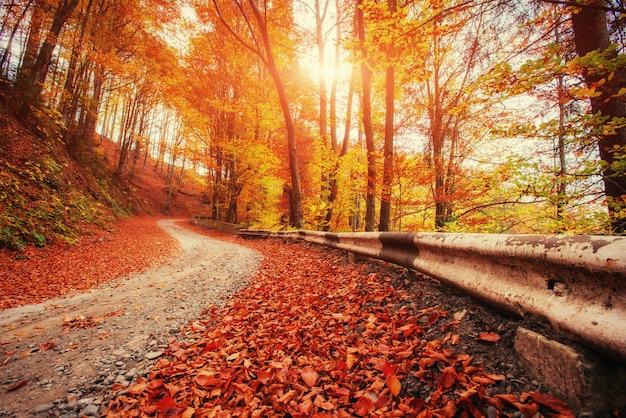 Ruelle d'automne. paysages spectaculaires du matin carpates ukraine europe