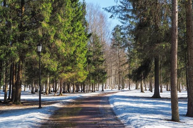 Ruelles de printemps dans le parc par une journée ensoleillée. ruelle dans l'ancien parc.