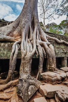 Ruines anciennes et racines d'arbres, temple ta prohm, angkor, cambodge