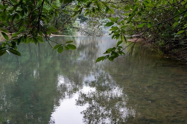 Le ruisseau dans la forêt vierge est très plat et clair