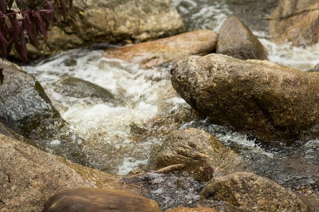 Ruisseau forestier parmi les pierres. flux d'eau froide propre dans les montagnes