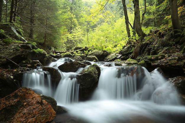 Ruisseau forestier qui descend des montagnes