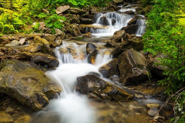 Ruisseau de forêt avec des cascades