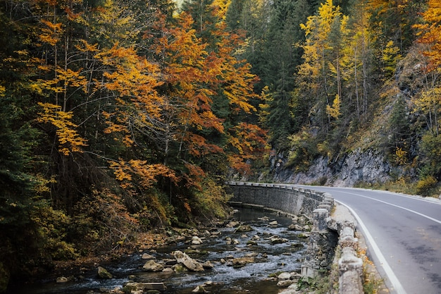 Ruisseau de montagne d'automne. une belle forêt d'automne et une route dans la montagne.
