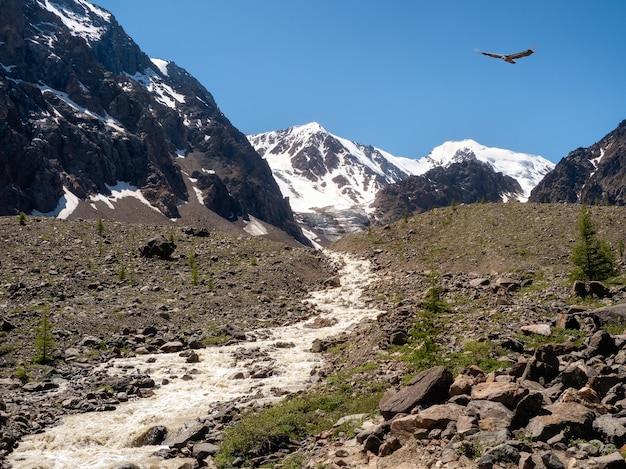 Le ruisseau de montagne descend d'un glacier. beau paysage alpin avec une rivière rapide. la puissance de la nature majestueuse des hauts plateaux.