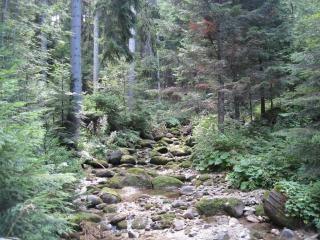 Ruisseau de montagne laisse