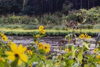 Ruisseau, de la nature