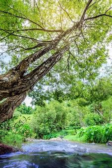 Ruisseau qui coule à travers le paysage de la forêt tropicale