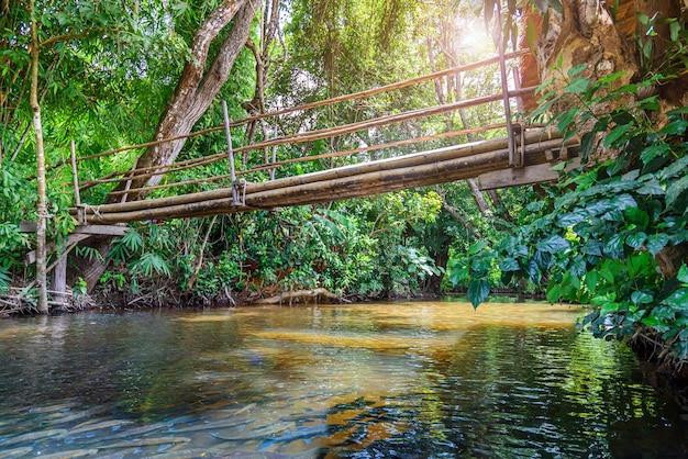 Ruisseau qui traverse le paysage de la forêt tropicale