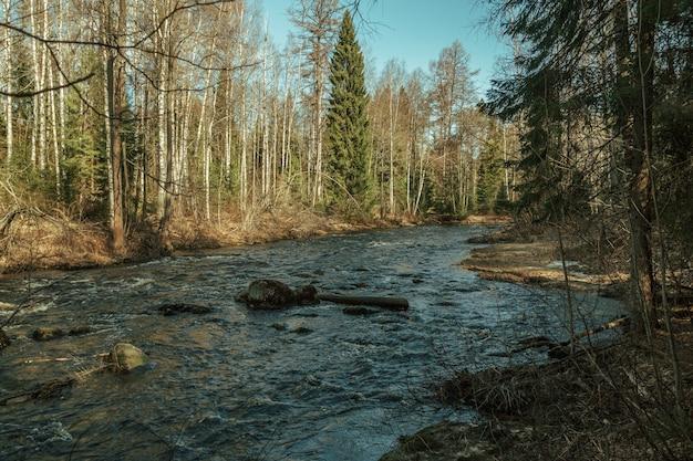 Ruisseau rocheux qui traverse la forêt en automne