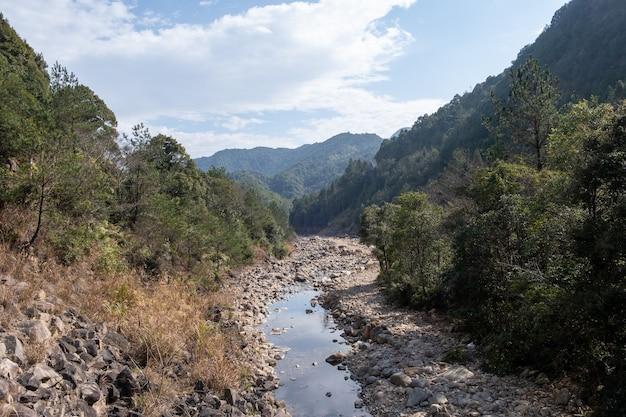 Un ruisseau sort de la forêt de montagne