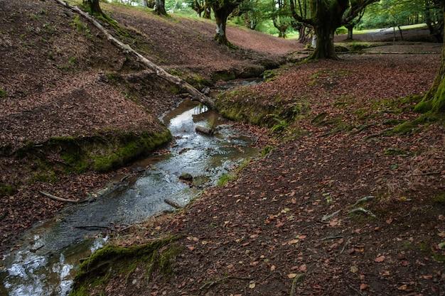 Ruisseau traversant un sol rouge foncé jusqu'à une forêt de hêtres