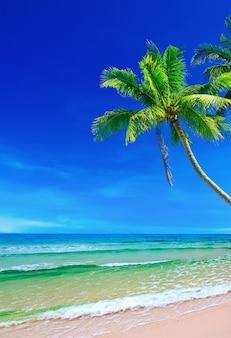 Sable blanc tropical avec des palmiers sur la plage koh kood, thaïlande