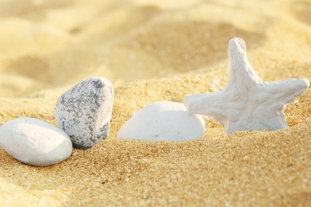Sable de mer avec étoiles de mer et coquillages