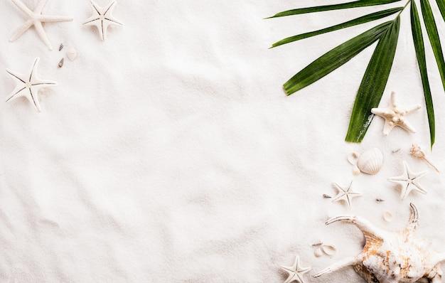 Sable de plage avec coquillages, feuilles de coco et étoiles de mer