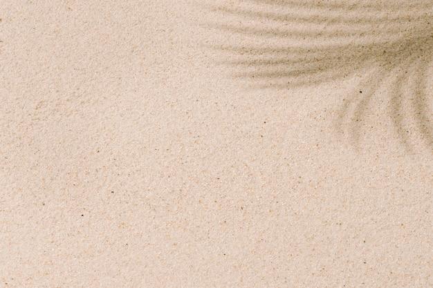 Sable de plage tropicale avec des ombres de feuilles de cocotier en été et vacances concept background copy space