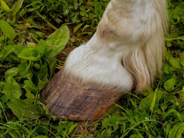 Sabots de chevaux adultes.