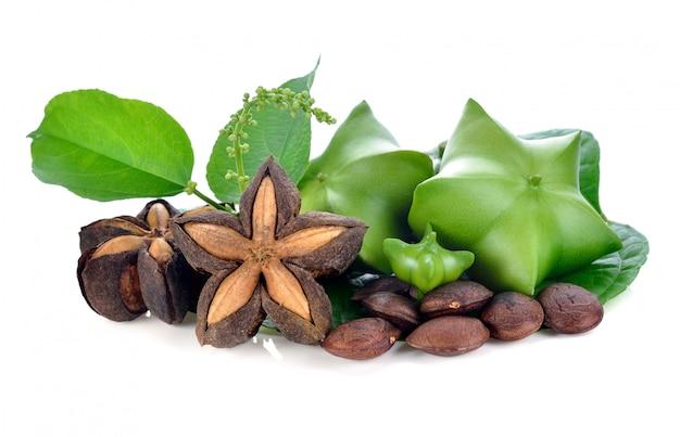 Sacha inchi sur des graines blanches et fraîches de la capsule du cacahuète sacha-inchi