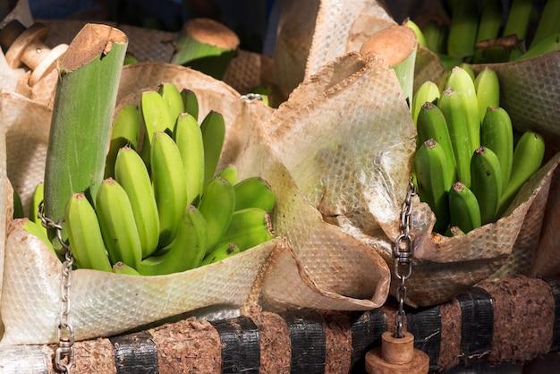 Sacs de banane dans une industrie de conditionnement de banane